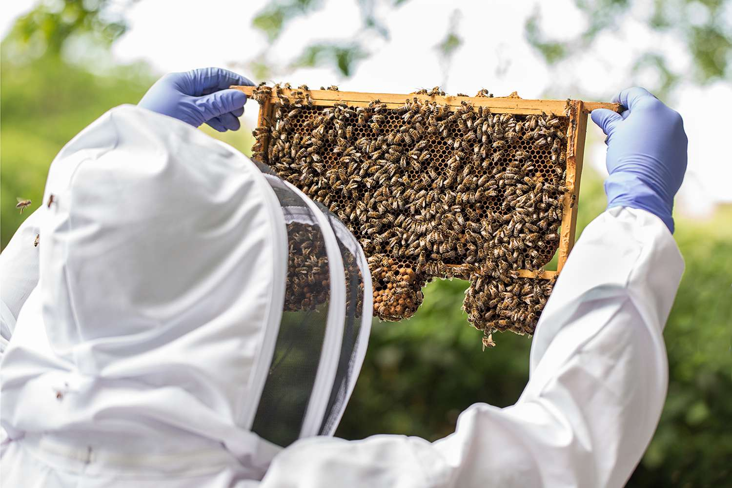 Bees and Bee keeping