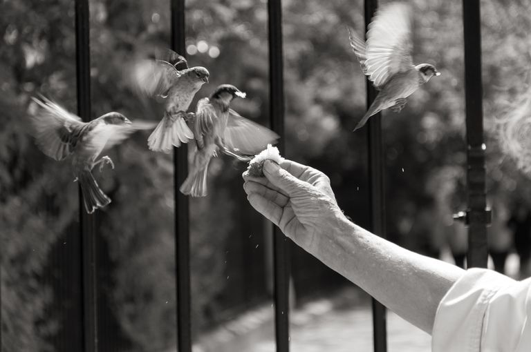 Close Up Of Hand Feeding Birds
