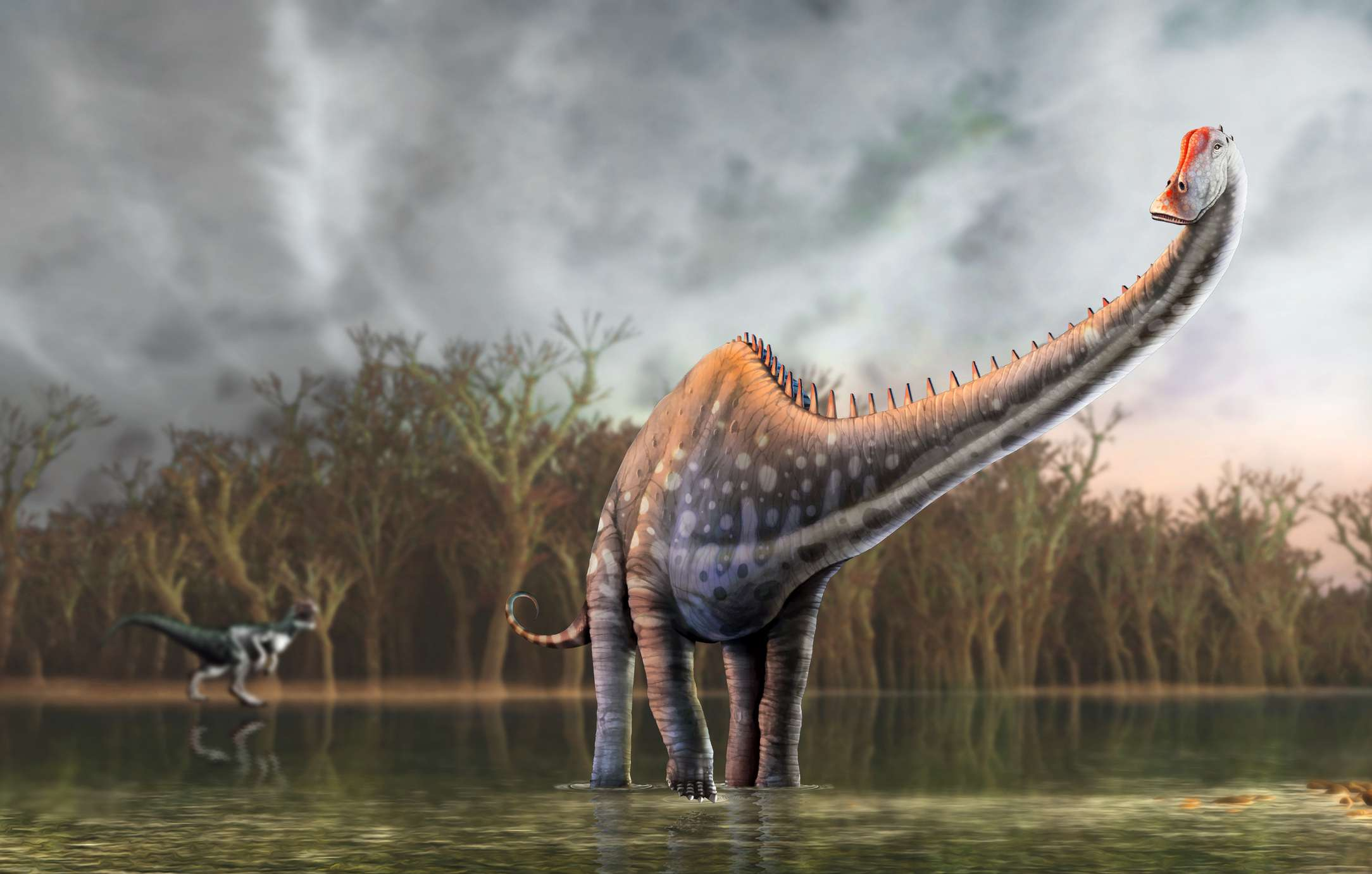 Diplodocus dinosaur, illustration