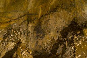 Fossilized skeleton of a European Lion