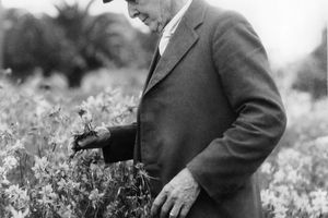 Luther Burbank in his garden of hybrid Shasta daisies that he developed.