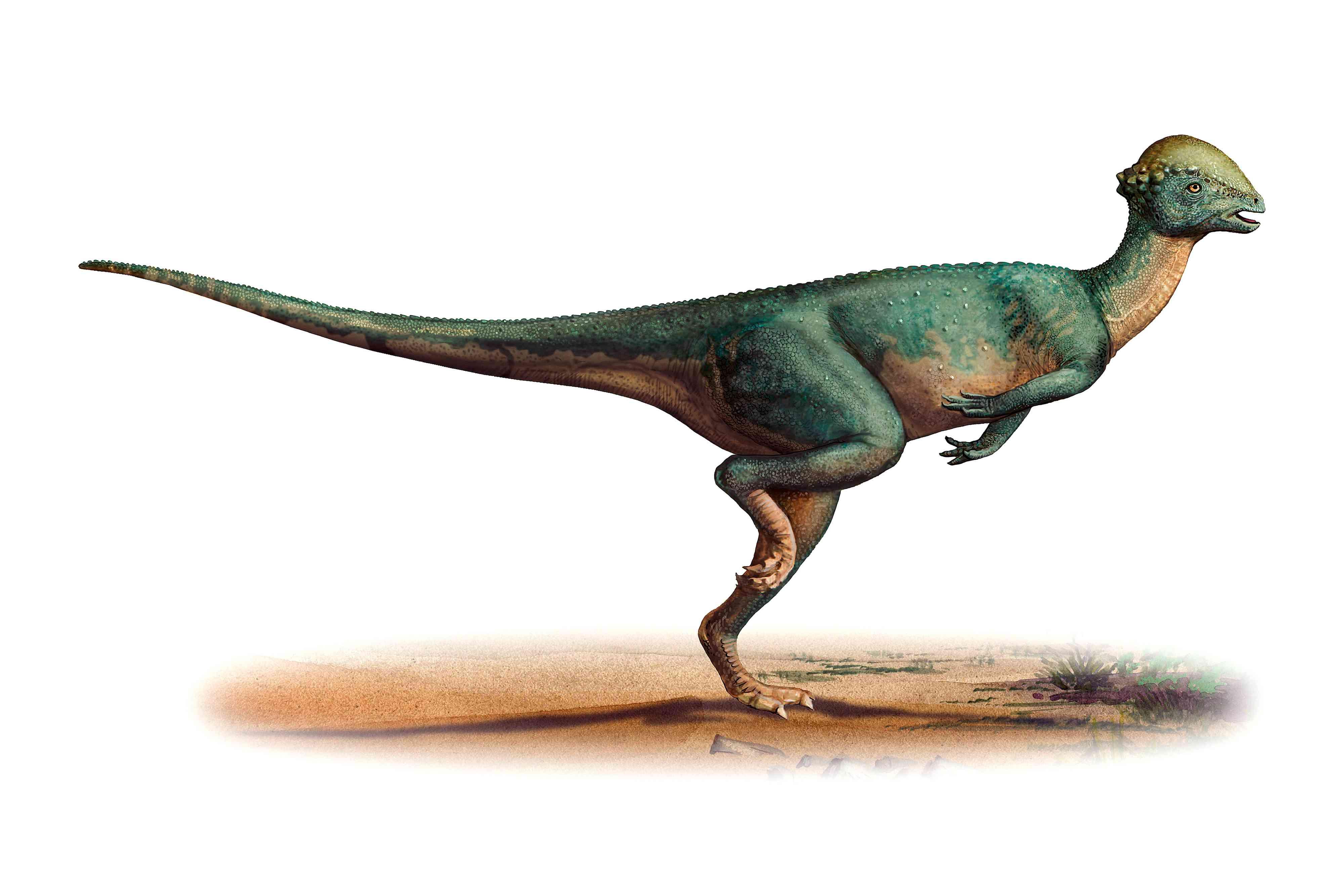 Stegoceras, a dinosaur of New Mexico