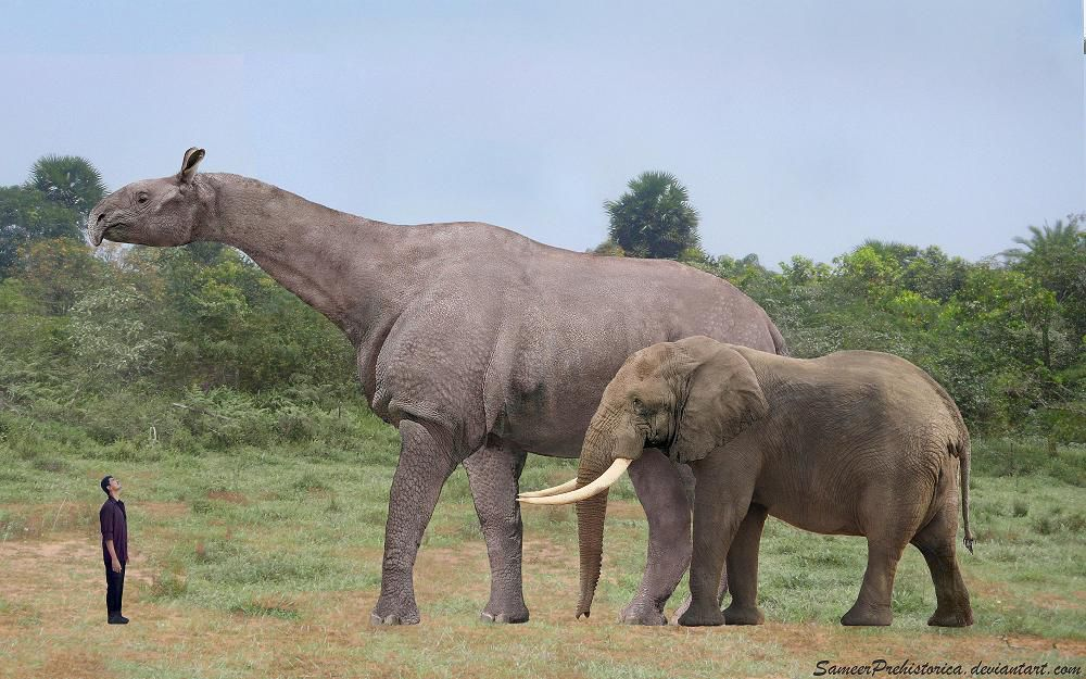 The 20 Biggest Prehistoric Mammals