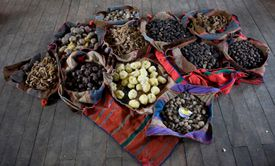 Varieties of Potatoes on displays in baskets.