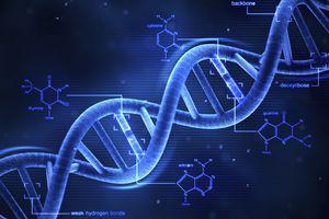3-D DNA Structure