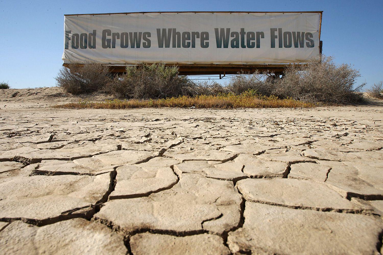 The Reincarnation Drought 6