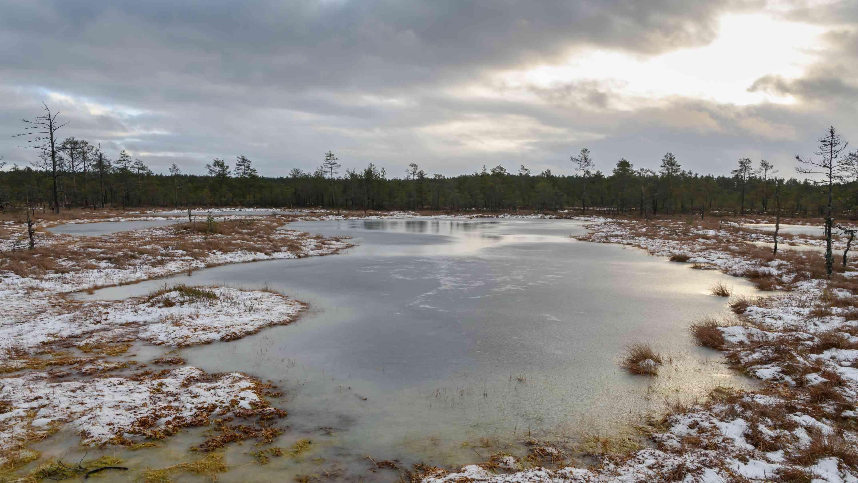 Estonian Peat Bog Lake in Winter