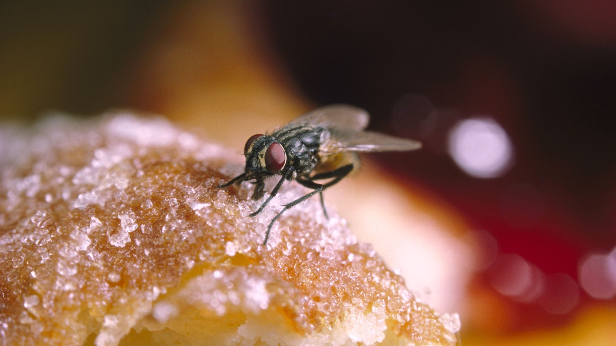 Download How To Get Rid Of Flies In Your Backyard Images ...