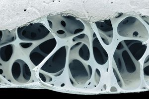 Bird bone tissue cross section