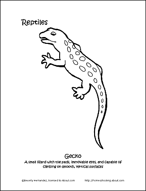 Reptiles Coloring Book - Ten Different Pages