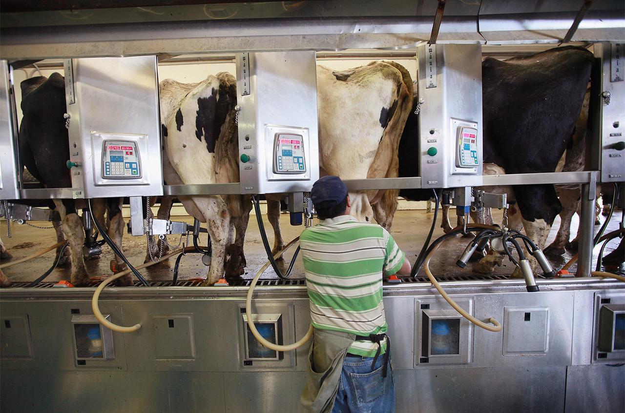 fakta om mjölk