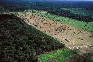 AMAZON BASIN: THE LAST FRONTIER