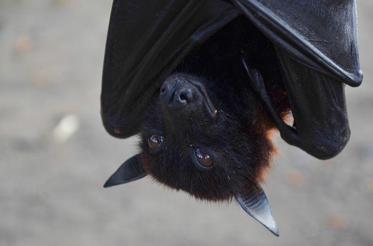 Bat Magic And Legends
