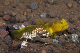 Shrimp and fish amongst rocks.