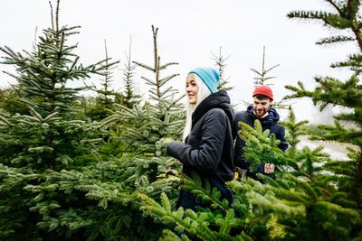 5af570c27f7 3 Reasons to Buy Your Real Christmas Tree Early
