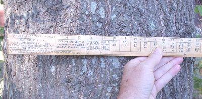 The Biltmore or Cruiser's Stick