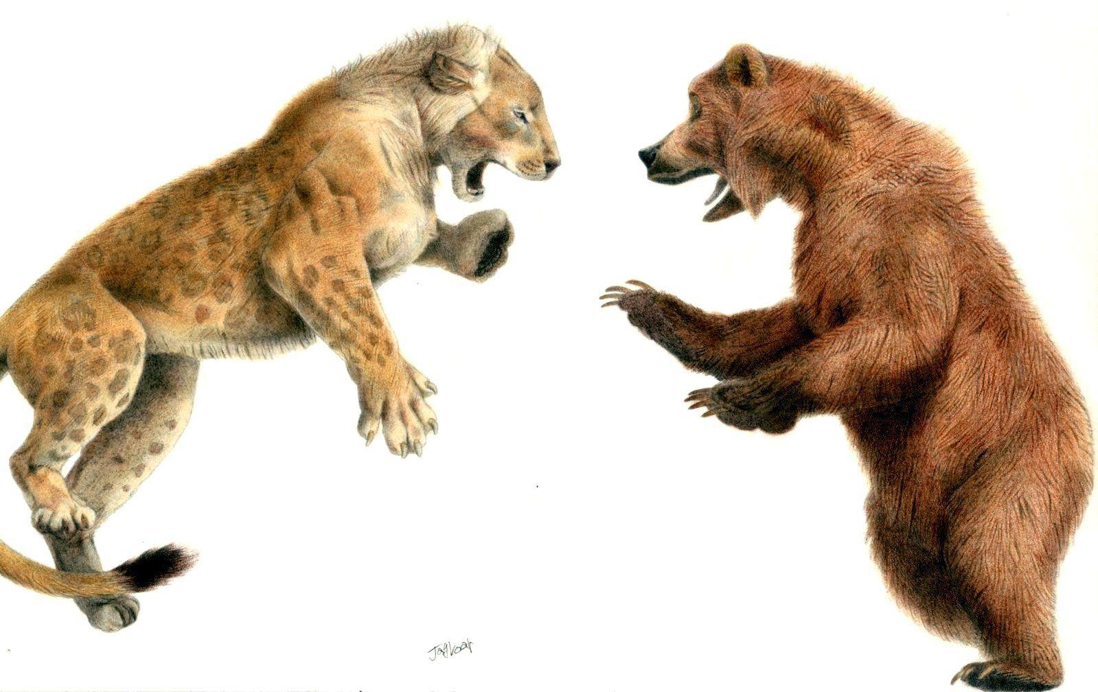 todo lo mejor prometedor parrilla  Oso de las cavernas vs León de la cueva: ¿Quién gana?