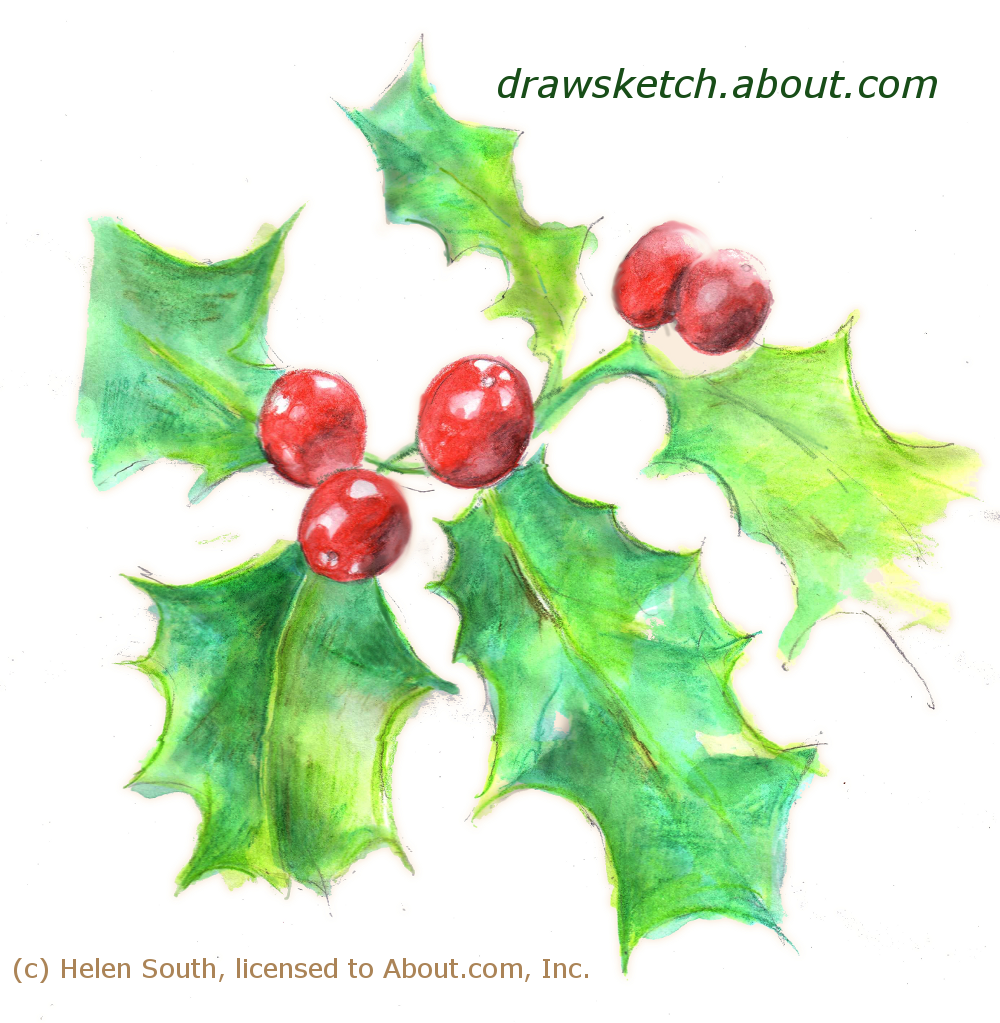 draw christmas holly with watercolor pencils