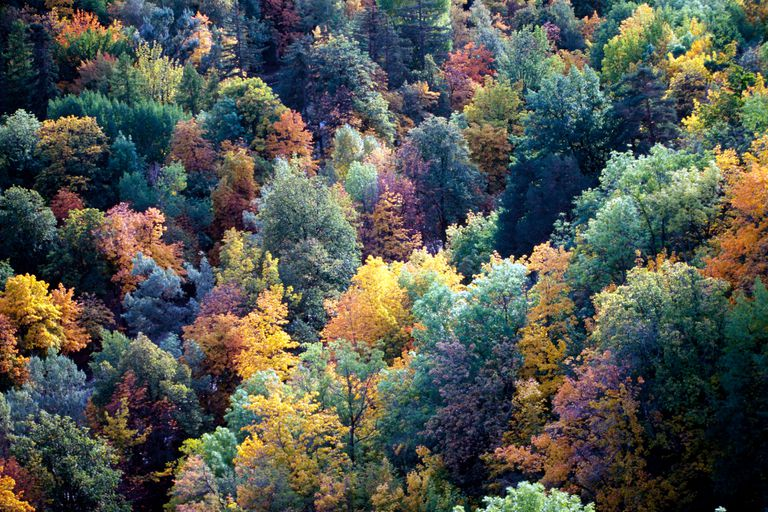Temperate deciduous forest in autumn
