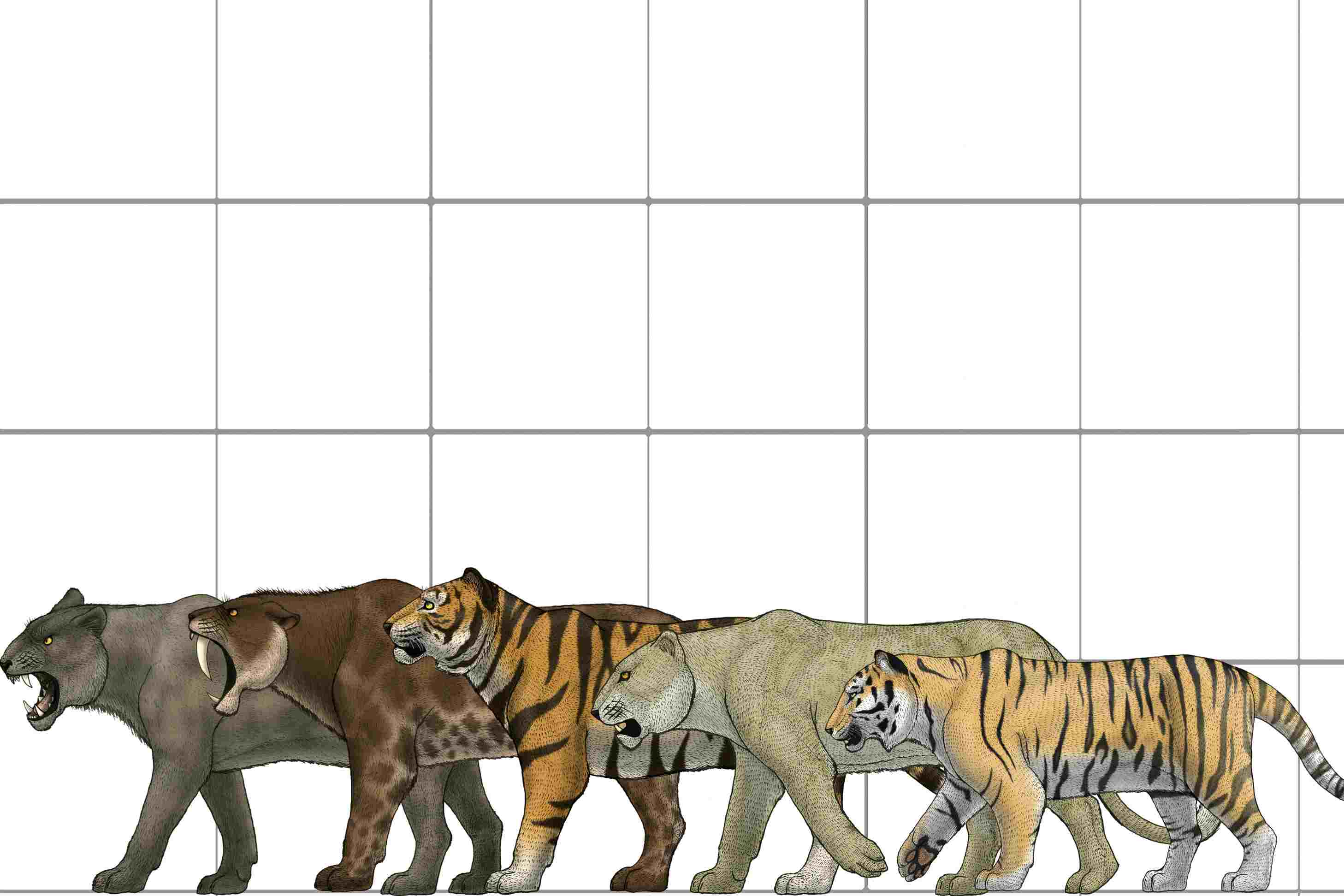Smilodon or Saber-Toothed Cat Trivia
