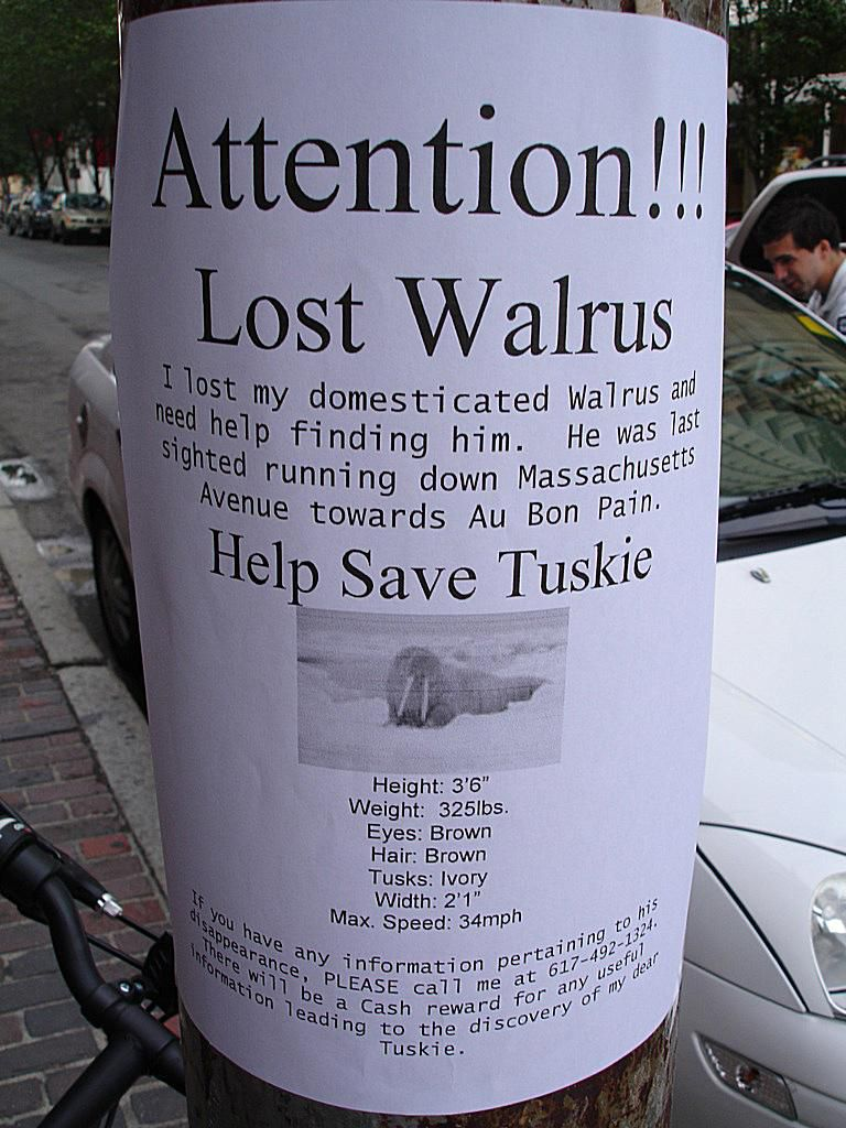 20 funny lost and found pet posters