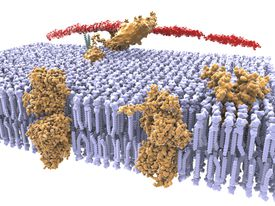 The cell membrane is an example of a selectively permeable membrane.