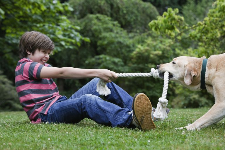 Boy playing tug-a-war with his dog