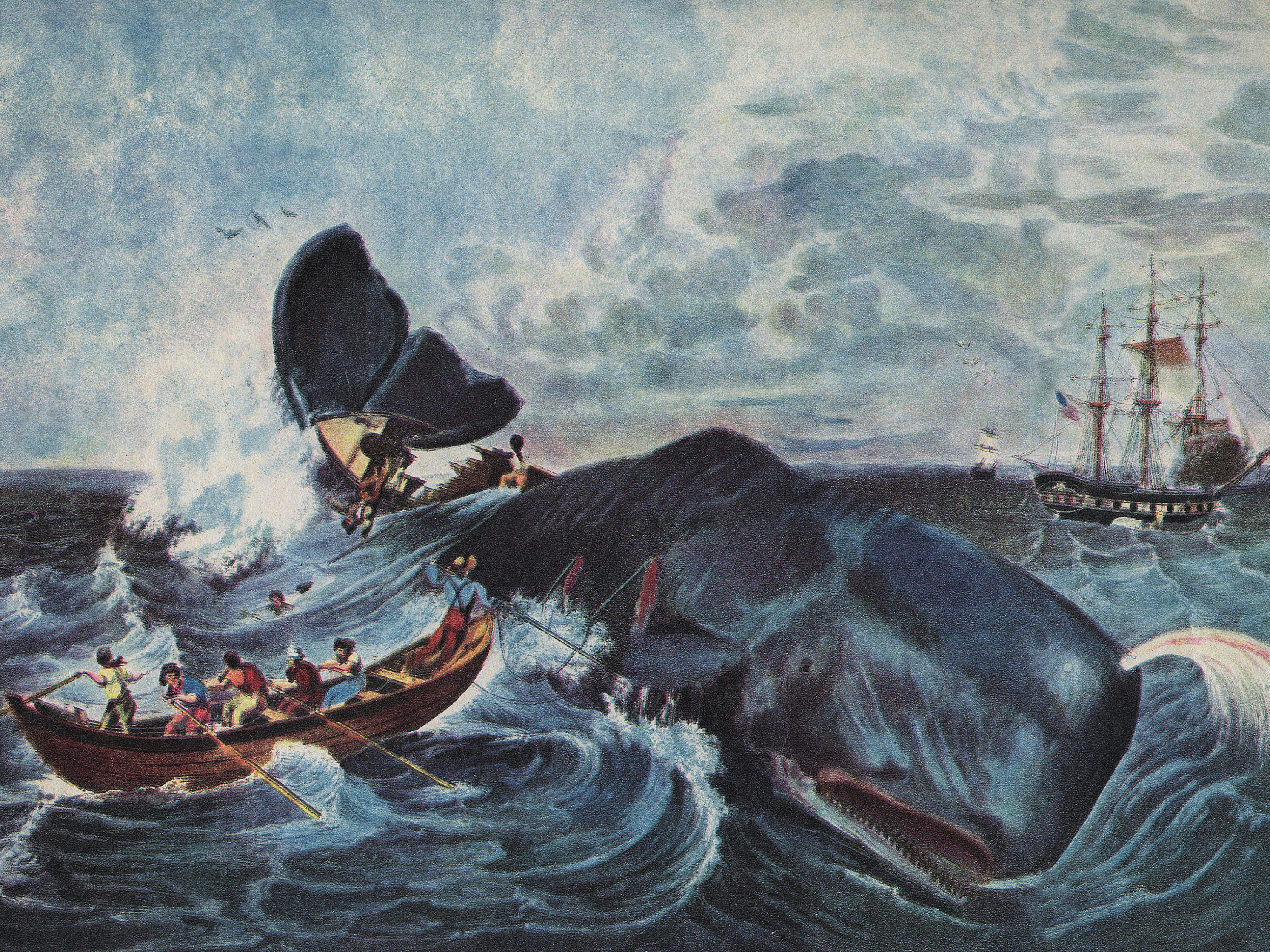 History Of The 19th Century Whaling Industry