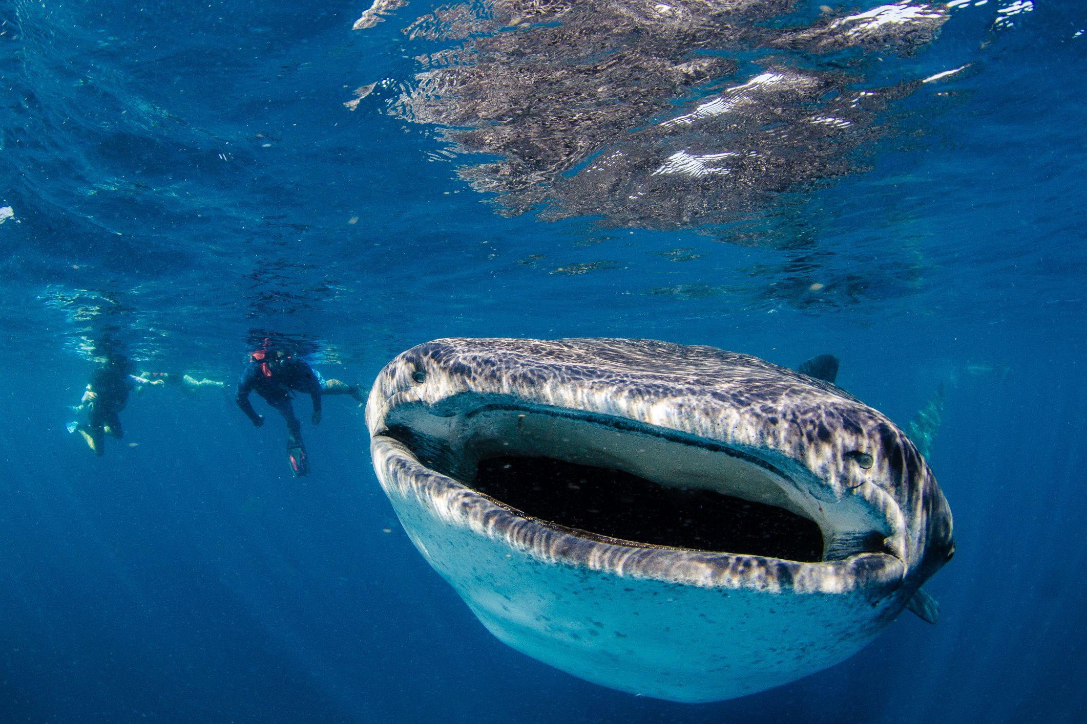 Explore the Largest Sea Creatures