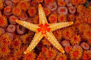 Starfish atop coral