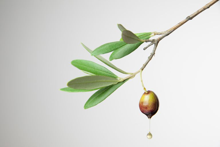 Close-Up Of Olive Oil Falling From Tree