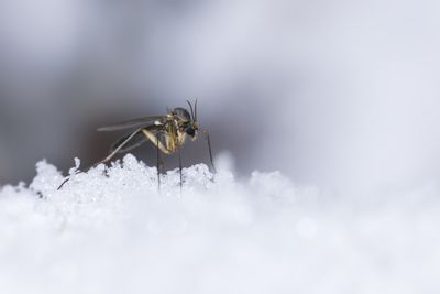 How to Kill Mosquitoes: What Works, What Doesn't