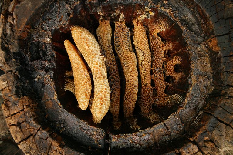 Close up of Hollow Log Beehive in France.