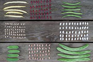 Legumes of different types displayed in groups on wooden slats