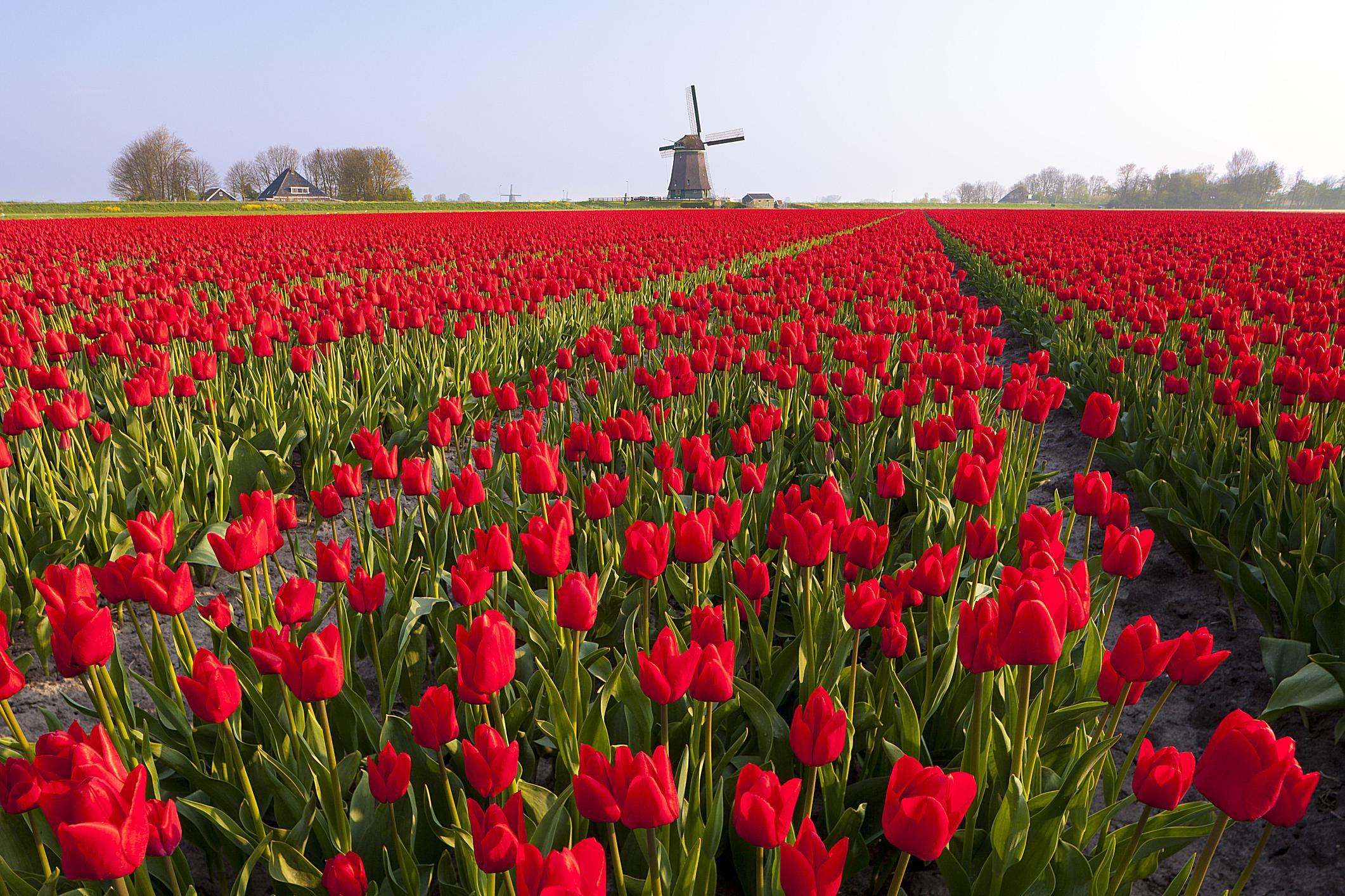 Holanda tiene uno de los programas más interesantes de residencia por inversión