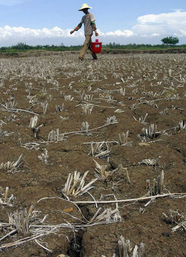 Man walking through dry crop field.