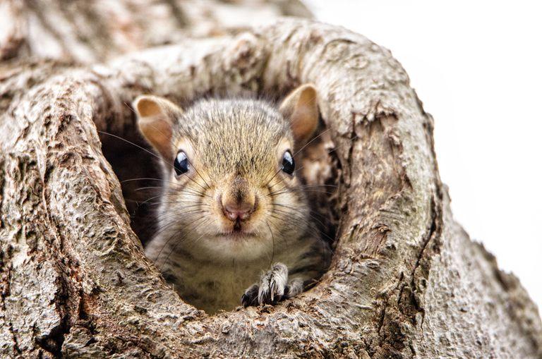 Baby Squirrel Looking at Camera