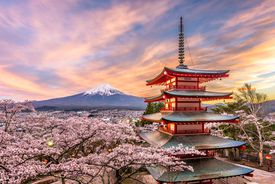 view of Mt. Fuji, cherry blossoms, and pagoda