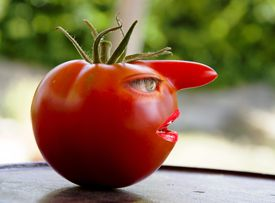 funny picture of tomato