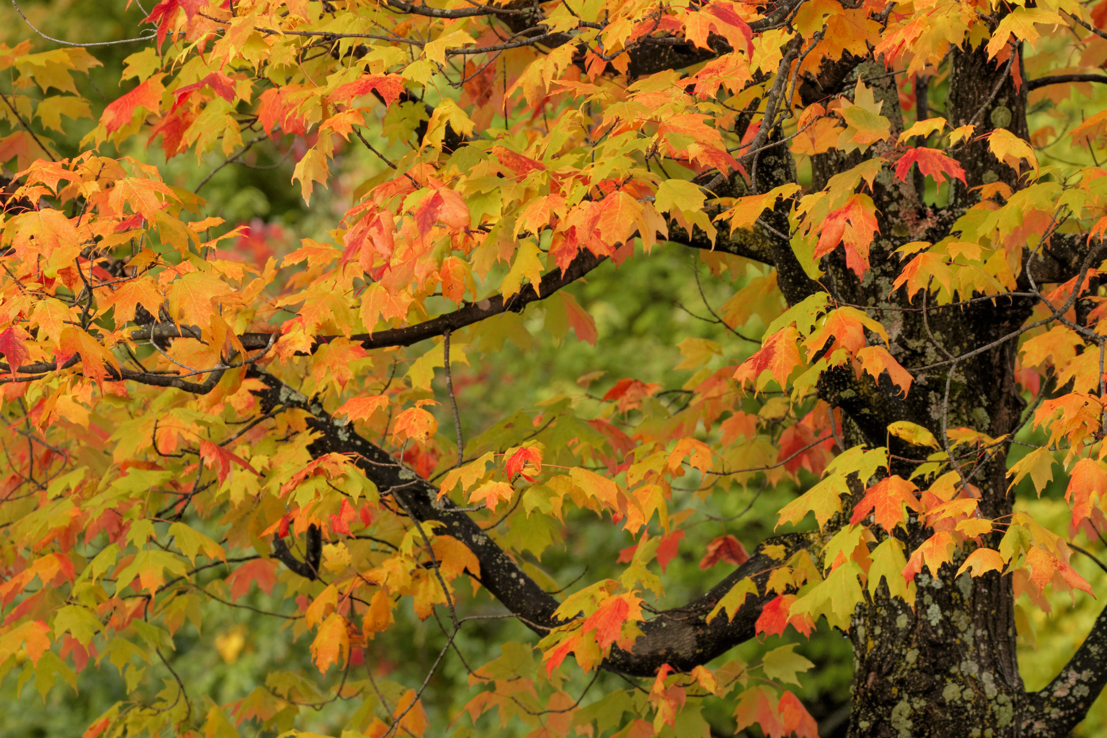 How To Identify Deciduous Trees By Their Leaves