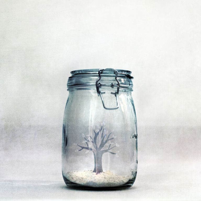 closed jar with tree inside