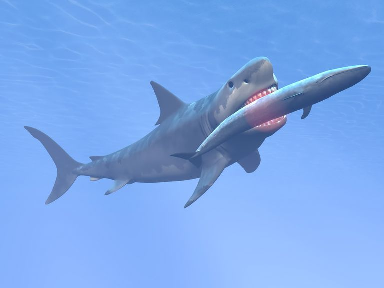 3-D rendering of megalodon eating a blue whale
