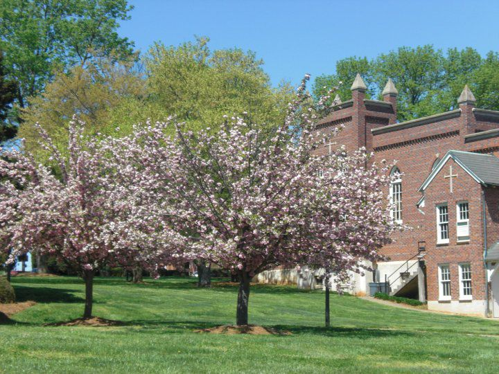 belmont abbey college  sat scores  admit rate  tuition