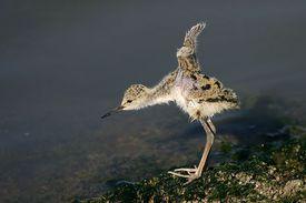 A tiny bird by a riverside