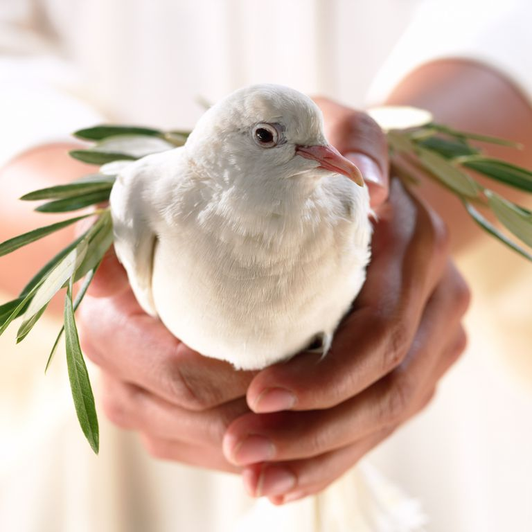 Hands holding dove and olive branch