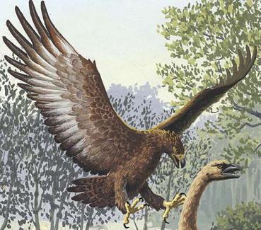 harpagornis haast's eagle