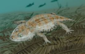 <i>Amphibamus grandiceps</i>, a dissorophoid temnospondyl from the late Carboniferous of Illinois in the water