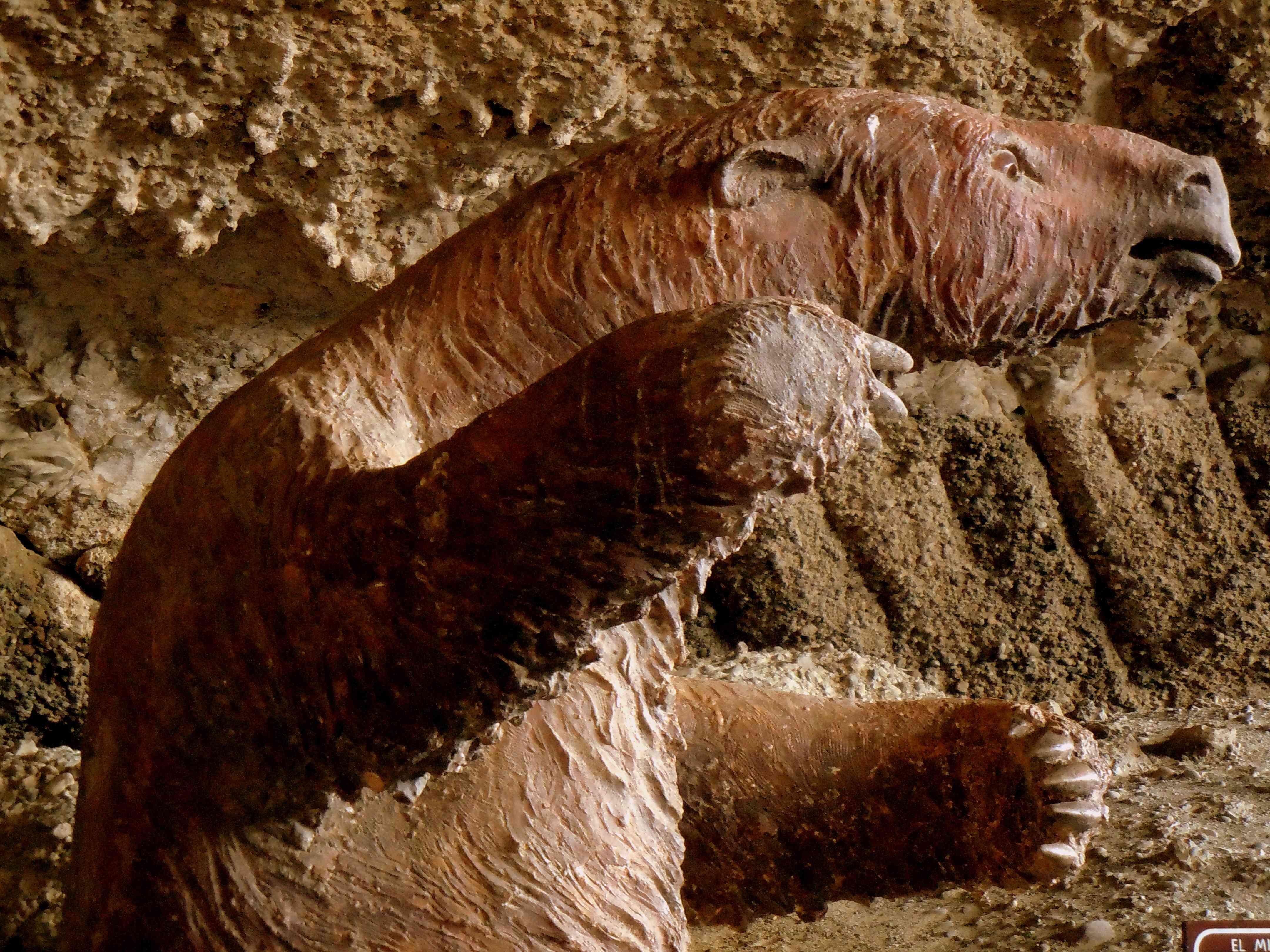 Replica of extinct Mylodon ground sloth of Patagonia