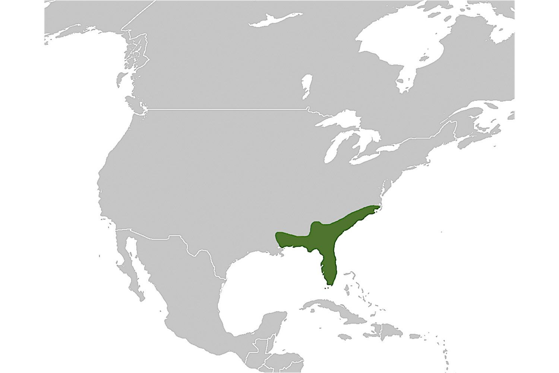 Diamondback rattlesnake distribution map