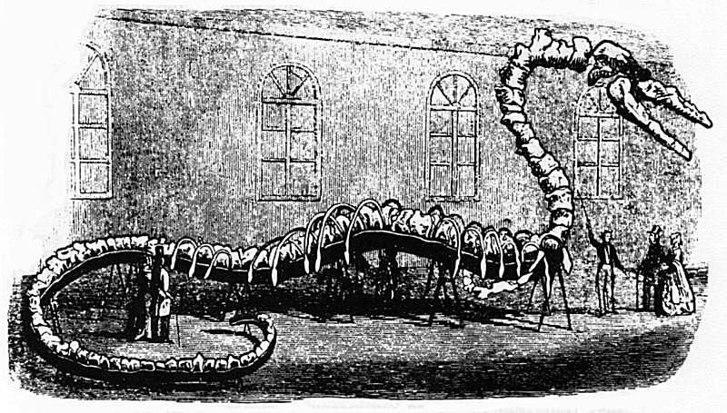 Illustration of the 1845 exhibit of a sea monster known as Hydrarchos, which was reported as fake